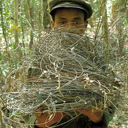 Wire snares from saola habitat, central Laos. (Photo by William Robichaud)